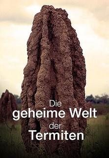 Die geheime Welt der Termiten stream