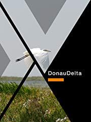 Donau Delta stream