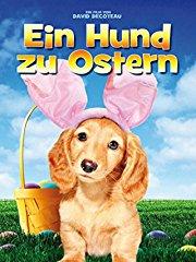 Ein Hund zu Ostern Stream