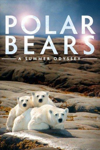 Eisbären 3D stream