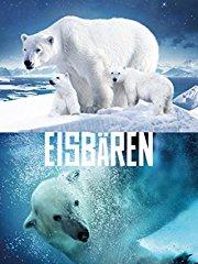 Eisbären stream