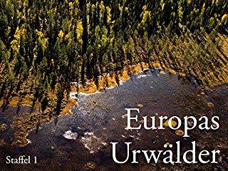 Europas Urwälder stream
