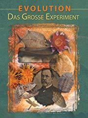 Evolution Das Grosse Experiment - stream