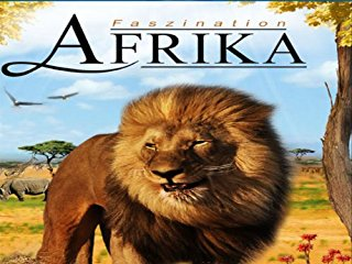 Faszination Afrika stream