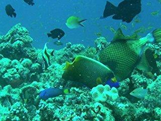 Faszination Korallenriff stream