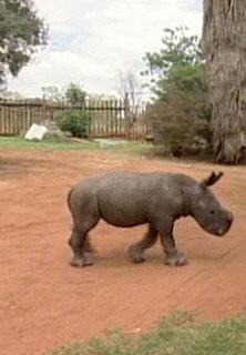 Findelkinder: Nashörner - stream