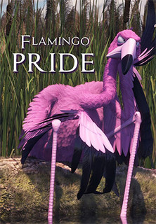 Flamingo Pride stream