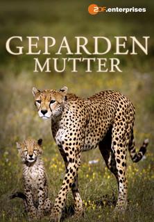 Gepardenmutter stream