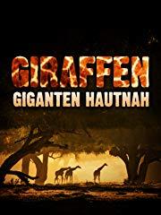Giraffen - Giganten hautnah stream