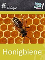 Honigbiene - Schulfilm Biologie stream