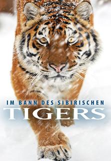 Im Bann des Sibirischen Tigers stream