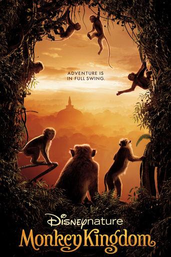 Im Reich der Affen Stream