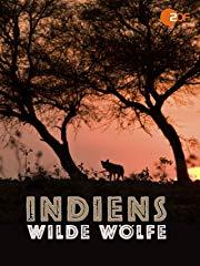 Indiens wilde Wölfe stream