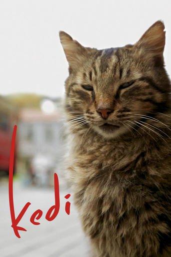 Kedi: Von Katzen und Menschen stream