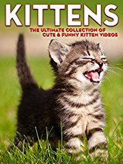 Kittens: The Ultimate Collection of Cute & Funny Kitten Videos stream