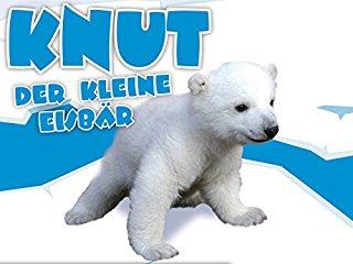 Knut stream