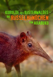 Kobolde des Küstenwaldes - Die Rüsselhündchen von Arabuko stream