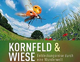 Kornfeld und Wiese stream
