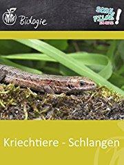Kriechtiere - Schlangen - Schulfilm Biologie stream