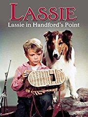 Lassie in Handford's Point stream