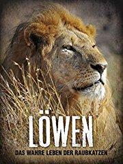 Löwen - Das wahre Leben der Raubkatzen stream