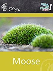 Moose - Schulfilm Biologie Stream