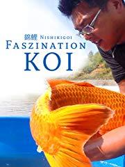 Nishikigoi - Faszination Koi stream
