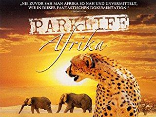 Parklife: Afrika stream
