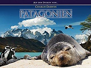 Patagonien stream