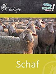 Schaf - Schulfilm Biologie stream