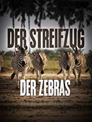 Streifzug der Zebras stream