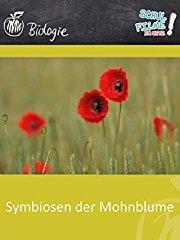 Symbiosen der Mohnblume - Schulfilm Biologie - stream