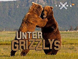 Unter Grizzlys stream