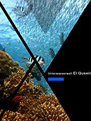 Unterwasserwelt bei El Quseir El Quadim stream