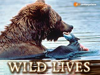 Wild Lives stream