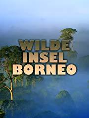 WILDE INSEL BORNEO stream