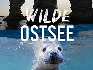 Wilde Ostsee stream
