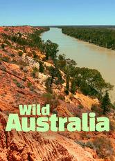 Wildes Australien stream