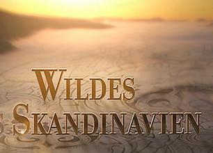 Wildes Skandinavien stream