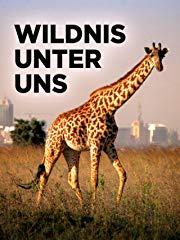 Wildnis Unter Uns stream