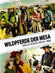 Wildpferde der Mesa Stream