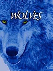 Wölfe (Wolves) stream