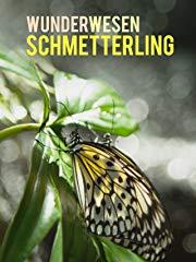 Wunderwesen Schmetterling Stream