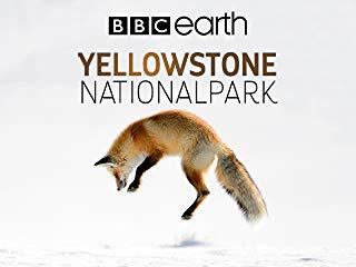 Yellowstone Nationalpark stream