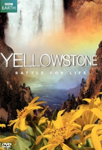 Yellowstone - stream