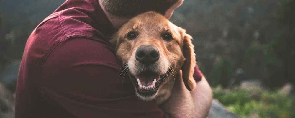 Mensch und Hund - Sicheres Miteinander