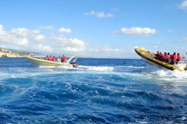 speedboat mallorca