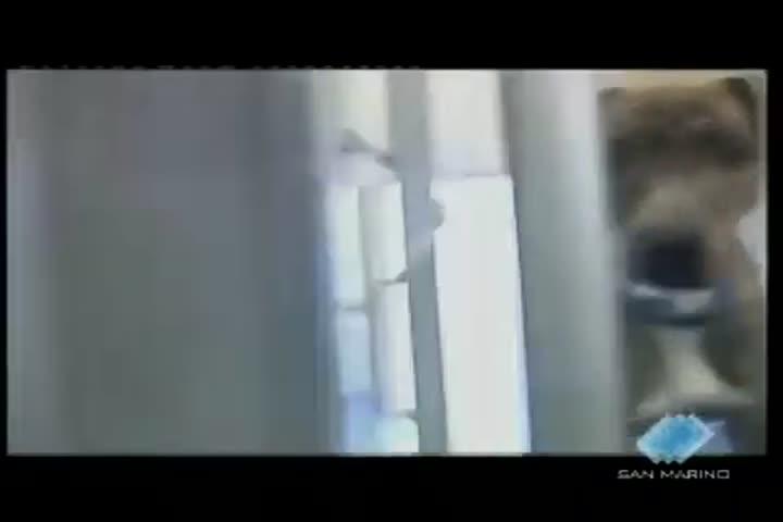 Un canile in prigione. I detenuti si prendono cura degli animali