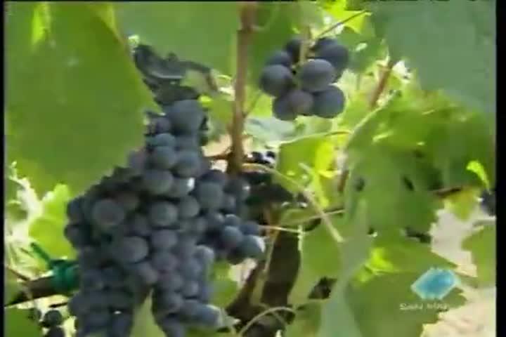 Crescita record per l'esportezione di vino