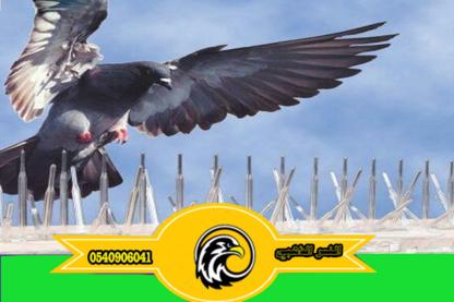 مكافحة الحمام والطيور المزعجة شركة النسر الذهبي لخدمات طرد الحمام0540906041
